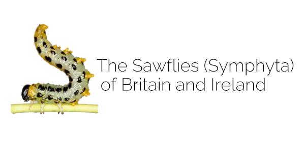Sawfly logo